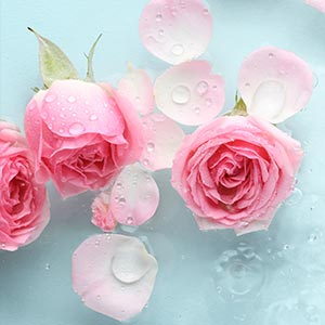Rose Water for Mind Image